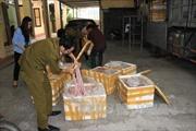 Bắt giữ 3 tấn lòng lợn đang phân hủy