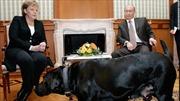 Ông Putin không dùng chó cưng dọa bà Merkel
