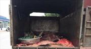 Hưng Yên: Tiêu hủy hơn 1,2 tấn lòng lợn thối
