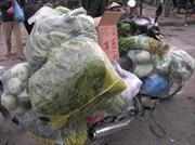 Công ty rau sạch tuồn rau bẩn vào trường học
