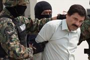 Cuộc vượt ngục của trùm ma túy El Chapo khuynh đảo phòng vé