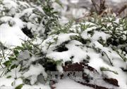 Mưa tuyết xuất hiện nhiều nơi tại Sơn La