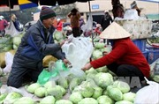 Rét hại, giá rau xanh ở Hà Nội tăng 30-40%