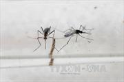 Virus Zika xuất hiện ở New Zealand