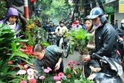 Đi chợ Bưởi xem hoa Xuân