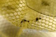 Trung Quốc xác nhận ca nhiễm virus Zika thứ ba