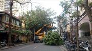 Hiện đại hóa việc cắt tỉa cây xanh Thủ đô
