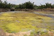 Ủy hội sông Mekong cảnh báo xâm nhập mặn tại ĐBSCL vẫn tiếp diễn