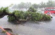 Giông lốc trong đêm tại Thái Nguyên, nhiều cây cổ thụ 50 năm bị bật gốc