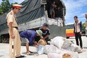 Thanh Hóa thu giữ gần 8 tấn mỡ động vật không giấy tờ