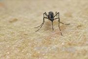 Brazil phát hiện bệnh thần kinh mới liên quan đến Zika