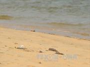 Điều tra nguyên nhân cá chết hàng loạt ven biển miền Trung