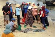 Người dân hoang mang khi cá chết hàng loạt ven biển