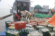 Ngư dân điêu đứng vì cá chết trắng bờ biển