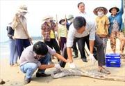 Kết luận ban đầu vụ cá chết hàng loạt: Do độc tố có độc lực mạnh