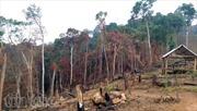 Nóng tình trạng phá rừng làm nương rẫy