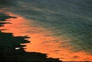 Thủy triều đỏ, khắc tinh của ngư dân