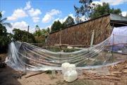7 nạn nhân ngạt khí độc tại Cà Mau đều được xuất viện