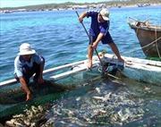 Thống kê số lượng cá chết tại đảo Phú Quý