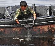 Nguồn nước thế giới đang ô nhiễm nghiêm trọng như thế nào
