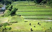 Đổi thay ở xã nông thôn mới Sơn Tinh