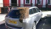 """Đội quân ong rượt đuổi xe hơi 2 ngày """"cứu chúa"""""""