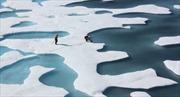 Bắc Cực có thể hết băng phủ ngay trong năm nay