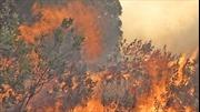 Nghệ An dập tắt cháy rừng tại huyện Nam Đàn