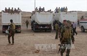 Iraq bắt hơn 500 tên IS lẩn trốn khỏi Fallujah