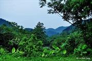 Trơ trụi rừng tại khu di tích lịch sử quốc gia