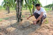 Khó khăn đầu tư nông nghiệp công nghệ cao