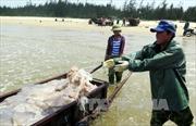 Hà Tĩnh hỗ trợ người dân sau sự cố môi trường biển