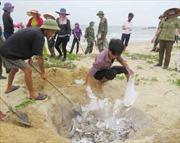 Thừa Thiên - Huế thiệt hại gần 135 tỷ đồng do cá chết