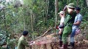 Hai doanh nghiệp được giao dự án trồng rừng lại phá rừng