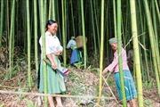 Hiệu quả chi trả dịch vụ môi trường rừng