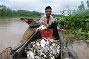 Nguyên nhân cá chết hàng loạt ở thượng nguồn sông Sài Gòn