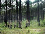 Làm rõ trách nhiệm ở các địa phương có diện tích rừng tự nhiên giảm