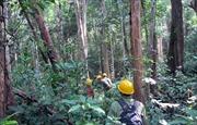 Giữ rừng là lẽ sống còn