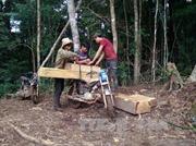 Kỷ luật Giám đốc Công ty lâm nghiệp Đăk Glei vì để xảy ra phá rừng