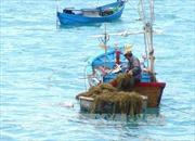 Phát triển bền vững biển đảo là nền tảng cho ngành mũi nhọn