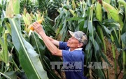 Tái cơ cấu nông nghiệp chưa tạo chuyển biến