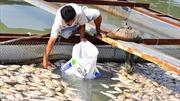 Lấy ý kiến ngư dân miền Trung để hỗ trợ thiệt hại