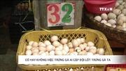 Có hay không trứng gà Ai Cập đội lốt trứng gà ta