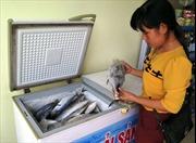 Khai thác, nuôi trồng thủy sản sau sự cố môi trường biển