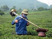 Người nông dân sáng chế máy hút sâu chè