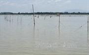 Khởi tố đối tượng đánh cán bộ kiểm lâm trên hồ Trị An