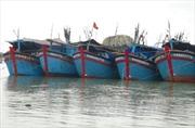 Miền Trung: Tàu về bến, dân chèn chống nhà cửa phòng bão
