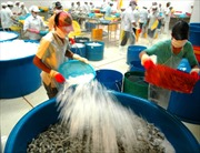 Doanh nghiệp thủy sản chưa mặn mà với VietGap