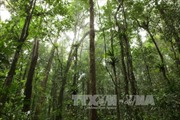 Bảo vệ, khôi phục và phát triển rừng Tây Nguyên bền vững