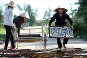 Thừa Thiên - Huế từng bước khôi phục sản xuất, đánh bắt trên biển